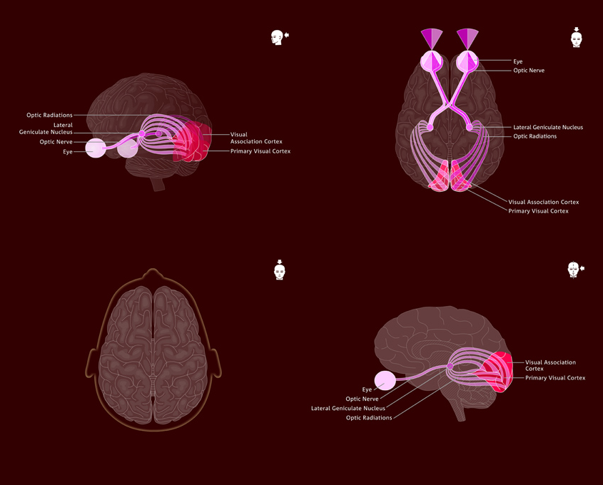 DasPlankton Berlin neuroscience info graphics