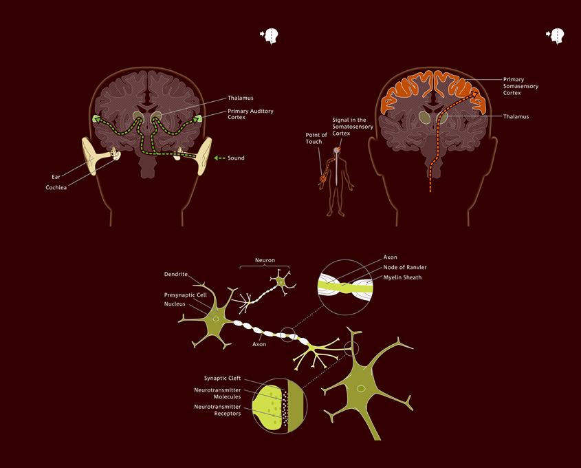DasPlankton Berlin neuroscience info graphic